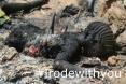 Islam Suicide Bomber illneverridewithyou 08.jpg