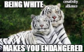Being white and endangered