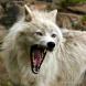White Wolf - White Pride