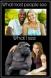 Niggers vs Apes