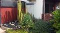 Cailen - Front Garden Cactus 2020
