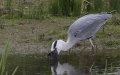 heron and rabbit 2/5