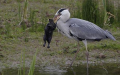 heron and rabbit 3/5
