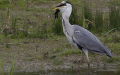 heron and rabbit 5/5