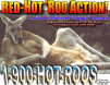 Red Hot 'Roo Action!