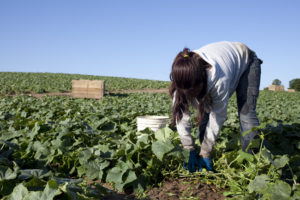 White Farm Laborers Appointed For Less Than Minimum Wage